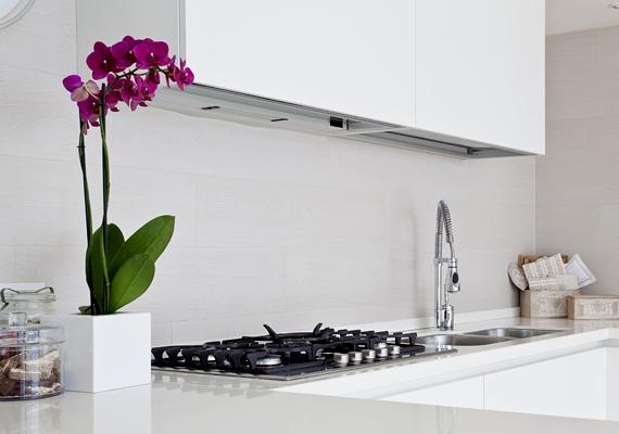 A növények minden helyiséget képesek egy pillanat alatt hangulatosabbá tenni. Így van ez a konyhával is.