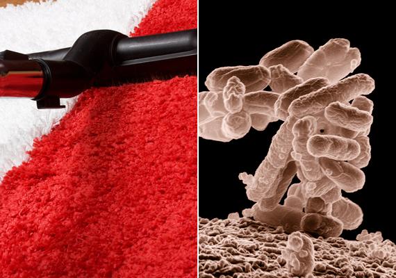 A lakásba a cipődön számtalan kórokozót bevihetsz, melyek aztán a padlóra, illetve annak réseibe kerülnek. Ha porszívózol a tisztaság érdekében, ügyelj arra is, hogy alaposan tisztítsd meg a porszívó fejét, ugyanis melegágya lehet az E.coli, vagyis az Escherichia coli nevű baktériumnak, mely komoly emésztő- és kiválasztó rendszeri betegségeket okozhat.