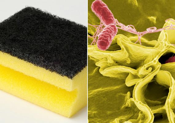 A mosogatószivacs a nedves közegnek és az ételmaradékoknak köszönhetően paradicsomi állapotokat nyújt a kórokozóknak. Ahogy arról egy korábbi cikkünkben is beszámoltunk, egy amerikai kutatás kimutatta, milyen gyakran megtalálni a szivacson a szalmonella baktériumát - a jobb oldali képen ennek mikroszkópos képe látható. Cseréld gyakran a szivacsot, mindig facsard ki, emellett sokan megoldásnak tartják, ha egy-két percre a mikrosütőbe teszed a fertőtlenítés érdekében.