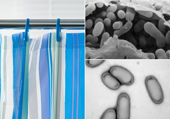 A nedves közeg a zuhanyfüggöny esetében is kockázatos, amit a lerakódott szappanmaradék tovább fokoz. Könnyen megtelepedhet a függönyön a Sphingomonas - alul - és a Methylobacterium - felül - baktérium is, melyek legyengült immunrendszer esetén komoly problémát okozhatnak. Ezért a zuhanyfüggönyt se felejtsd el rendszeresen tisztítani, időnként pedig lecserélni is érdemes.