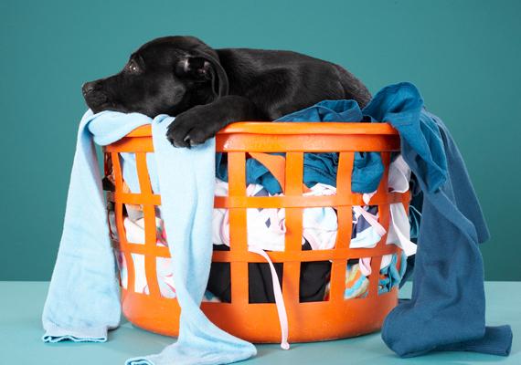 A szennyestartó kosár is problémás terület: miután a ruhákat a mosógépbe tetted, tisztítsd meg a kosarat is, hogy megszabadulj a belső felületén, különösen az alján - található szennyeződésektől.
