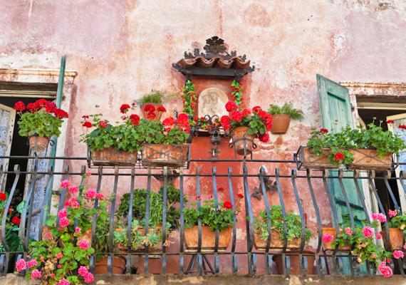 A sok virág tipikusan egy olaszországi erkély képét idézi. Ne félj egy ládába ültetni a különböző balkonnövényeket!