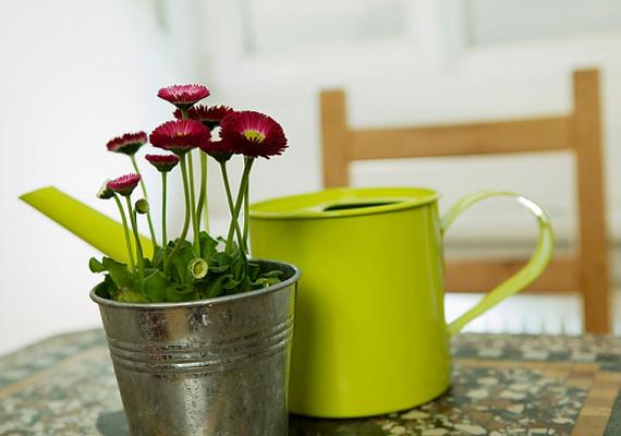 Ha sok növényed van, locsold őket rendszeresen. Ezzel nemcsak nekik teszel jót, de az elpárolgó víz a levegőt is felfrissíti és hűti.