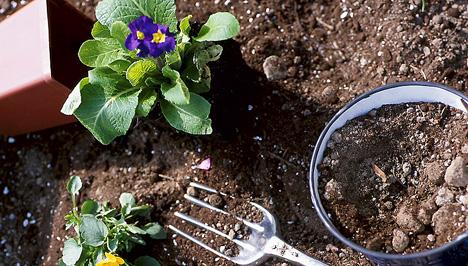 Hervad a virág? Így keltsük életre őket!