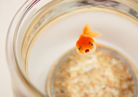 A szobaszökőkutak és akváriumok - pláne akkor, ha aranyhal is él bennük - jótékonyan hatnak a karrier-chi áramlására, ezáltal pedig hozzájárulnak az anyagi biztonság megteremtéséhez.