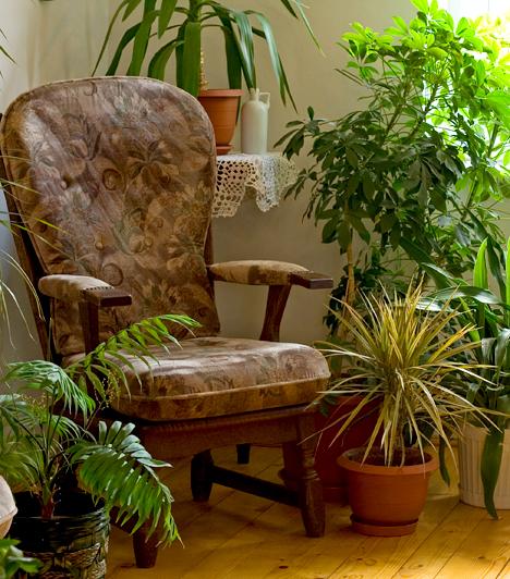 Tarts kevesebb növényt!                         A szobanövények számos jótékony hatással rendelkeznek, bármennyire is szereted azonban otthonodban érezni a természetet, ha túl sok van belőlük, az hozzájárul a páraképződéshez. A túl párás helyiségekben érdemes csökkenteni a számukat.