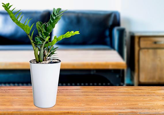 Vannak növények, amelyeket nem célszerű mozgatni - ilyen például a karácsonyi kaktusz -, ugyanakkor a zöld leveles szépségek esetében azzal biztosíthatod, hogy egyenesen nőjenek, ha mindennap egy kicsit megforgatod őket. Ne tedd azonban előbbit bimbózó, virágzó növények kapcsán.