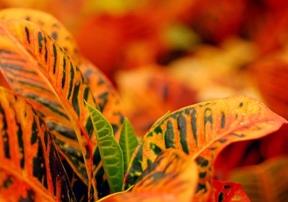 A virágok levelein is könnyen megtelepedhet a por, földjükön pedig a penész, ha nem figyelsz rájuk is rendszeresen.