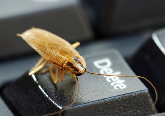 Már maga a csótány látványa is kellemetlen perceket szerezhet az embernek, a rovar ráadásul sok kellemetlen betegséget is terjeszt. Többek között allergiás, valamint gyomor-bélrendszeri megbetegedések okozója lehet.