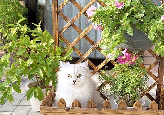 Egy kevés zaccal a cicákat is távol tarthatod kedvenc növényeidtől, nem kedvelik ugyanis az illatát.