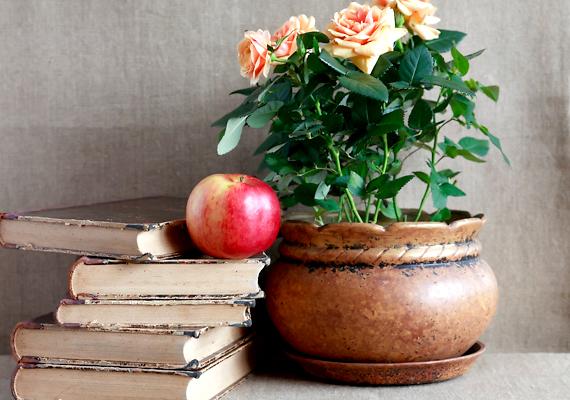 Néhány növény kifejezetten kedveli a savat közeget, ezért, ha zaccot keversz a földjükhöz, meghálálják majd. A rózsák és a rododendronok esetében például bátran alkalmazhatod a módszert.
