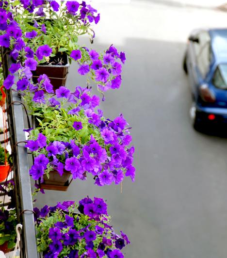 Garázdálkodás az erkélyen  A házirend legtöbbször előírja, hogy fontos ügyelni a társasház városképi megjelenésére, valamint a külső személyek biztonságára. Vigyázz, hogy az ablakpárkányon vagy az erkélyen ne helyezz el semmi olyat, ami leeshet, óvatosan locsold a virágokat, emellett ne dobj ki semmit ilyen módon. Ha dohányzol az erkélyen, használj hamutartót.