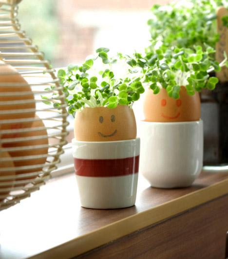 Fűszernövények  Akármilyen apró is a lakásod, néhány tő fűszernövénynek biztosan akad egy kevéske hely. Az ablakon beszűrödő meleg napsugarak most már elég fényt biztosítanak a növények életben tartásához, a friss illat és az üde zöld szín pedig friss, tavaszi levegőt hoz az otthonodba. Ha még vidámabbá akarod tenni az egyszerre szép és hasznos növénykéket, ültesd őket megszárított tojáshéjba, amit apró csészébe vagy tojástartóba állítasz.