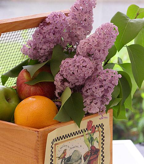 Gyümölcsök a kosárban  Az illatos virágok mellett a friss, lédús gyümölcsök is a tavasz várva várt ajándékai közé tartoznak. Ne rejtsd őket a hűtő mélyére, egy csinos tálban mindig rendezz el annyit, amennyi néhány nap alatt elfogy. Illatos, mutatós és csalogató díszei lesznek a konyhának vagy az étkezőasztalnak.