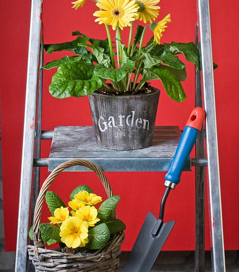 Kert a sarokban  Ha nem tartozol azon szerencsések közé, akiknek van legalább egy talpalatnyi kertjük, ahol kiélhetik tavaszi szenvedélyeiket, teremts kerti hangulatot a szoba egyik sarkában. Egy apró szobai létrára vagy egy egyszerű sámlira állíts néhány kopott kaspót, tegyél bele virágokat, és helyezz el körülöttük néhány apró kerti szerszámot - egy pici ásót, apró gereblyét vagy egy csinos kis locsolókannát.  Kapcsolódó cikk: 3 romantikus, meseszép dísztárgy, amit te is elkészíthetsz »