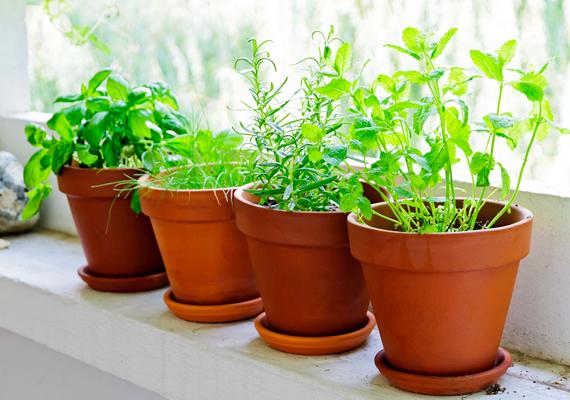 A teafilter tökéletesen felszívja a nedvességet, amit a teafőzésen kívül is kihasználhatsz: ha a már használt filter megszáradt, tedd a növények tartójában a cserép alá, így az felszívja majd a felesleges nedvességet, ami megakadályozza például, hogy a túlöntözés miatt a növény elpusztuljon.