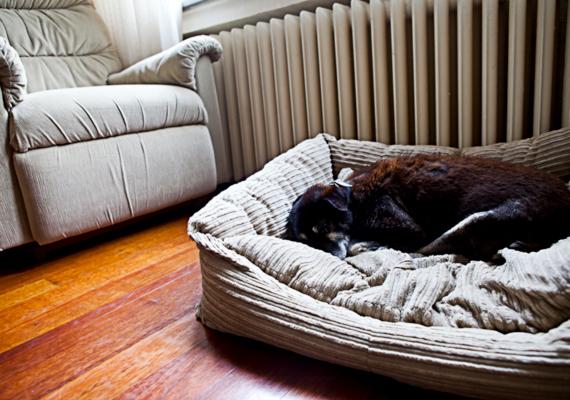 Jó időben ez nem szempont, a fűtésszezon előtt azonban próbáld úgy átrendezni a lakást, hogy lehetőleg egy bútor se helyezkedjen el a radiátor előtt, elfogva ezzel az értékes meleget.