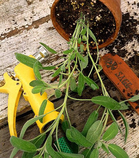 SzobanövényekA penész a szobanövények talaján is képes megtelepedni. A fürdőszoba rendszeres takarításán túl ügyelj a megfelelő páratartalomra, és a növények túlöntözését is kerüld, hiszen a penész erős allergén, akár asztmát is kiválthat.
