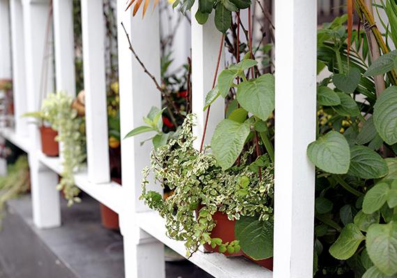 Szerencsés vagy, ha kerted nem is, de erkélyed van, hiszen azt is zöld szigetté varázsolhatod, ahová kiülve a jótékony szín minden pozitív hatását érezheted.