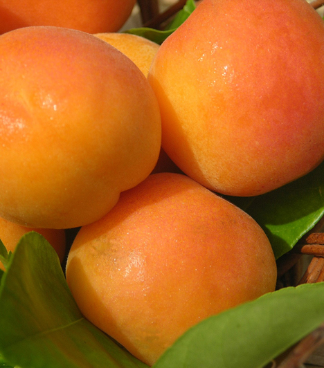 Sárgabarack  Az aranyló, édes gyümölcsöt nemcsak lekvárnak főzheted be, persze annak is nagyon finom. Tedd lepényekbe, piskótába, vagy készíts belőle fagylaltot.Kapcsolódó cikk:5 különleges lekvár és kompót »