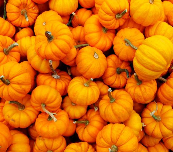 Az A-vitamin a bőr, a haj és a körmök számára is fontos, előanyaga a béta-karotin minden narancssárga zöldségben, így a sütőtökben is jelen van.