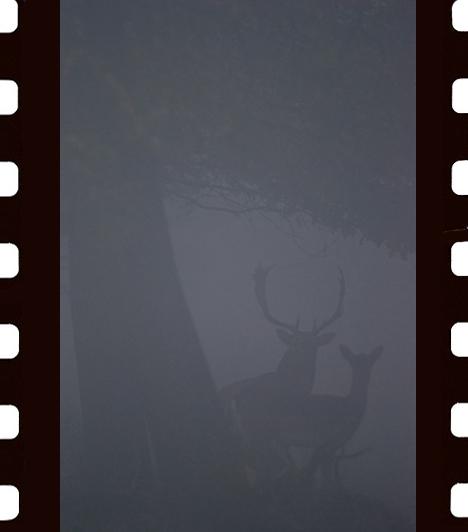 Krizák István: KödbenKrizák István és barátja hajnalban egy vadföld szélén szerette volna elhelyezni lessátrát, de akkora köd volt, hogy szinte semmit sem láttak. Ezért úgy döntöttek, hogy inkább az erdőben cserkelnek. Alig tettek pár lépést, és ez a látvány tárult eléjük.III. díj, Az emlősök viselkedése