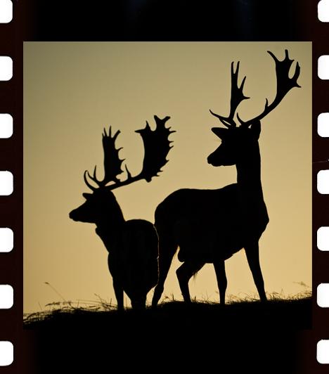 A naturArt Magyar Természetfotósok Szövetsége 2009-ben 17. alkalommal hirdette meg Az Év Természetfotósa pályázatot, amely hazánk és a közép-európai régió legjelentősebb természetfotós pályázata. Az Év Természetfotósa kitüntetést Haaberg Orsolyának ítélte a zsűri, az Év Ifjú Természetfotósa Rakó Alex lett. Képgalériánkban a zsűri által legjobbnak ítélt 115 fotóból láthatsz válogatást.Fotó: Dámbikák - Kiss Gábor