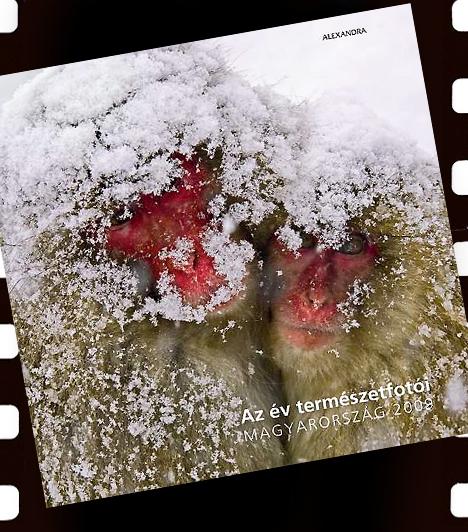 A pályázatra érkezett 115 remekműből az Alexandra Kiadó színes albumot jelentetett meg kétféle borítóval, készítői ugyanis egyiknek sem tudtak ellenállni. Az albumot itt rendelheted meg. »Ezúton köszönjük az Alexandra Kiadónak és a naturArtnak a képgaléria elkészítéséhez nyújtott segítséget!