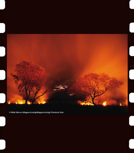 Máté Bence: Pantanal tüze  Máté Bence Pantanal tüze című képét a brazíliai Pantanal mocsárban készítette még 2009-ben.