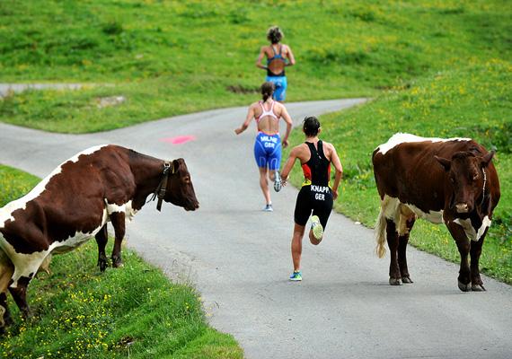 M. Schmidt János Futás! című képén a triatlon-világkupa egyik futamát látjuk, ahol tehenek tévedtek a pályára. A fotó a Sport kategóriában ért el első helyezést.