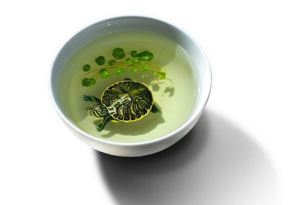 Itt már növényzet is társult a teknőshöz.