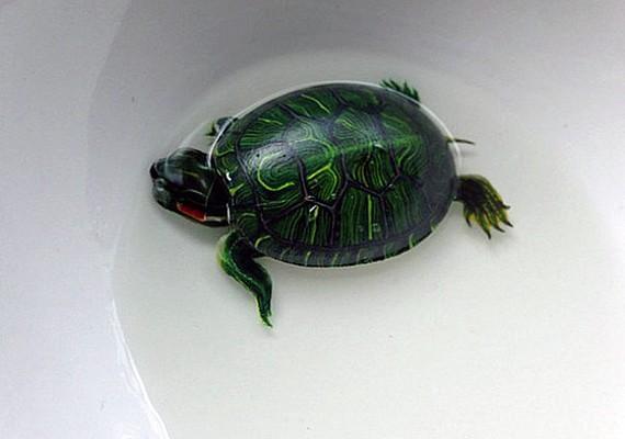 Az apró teknős különösen élethűre sikeredett.