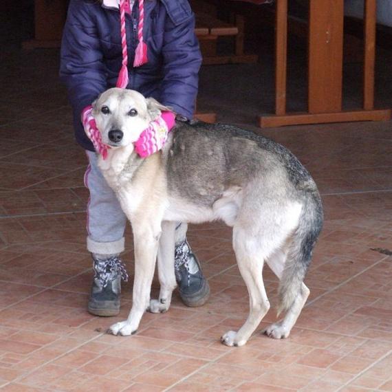 Az eddigi adatok alapján úgy tűnik, hogy a világ legidősebb kutyája egy magyar eb. A Sárrétudvariban élő husky-keverék 26 éves, ami emberi években 182 esztendőnek felel meg. Buksi még mindig egészséges és mozgékony kutya, és az állatorvosok úgy tartják, hogy még öt évig is elélhet. Gazdája szerint tápot nem kapott, csak nyers húst, és azon belül is a csirke a kedvence. Ica néni, a gazdi azt is elmondta, hogy Buksi kicsit nagyothall, de más problémája nincsen. Az eddigi rekordtartó a 30 évet élt ausztrál kelpie fajtájú eb, Maggie volt.
