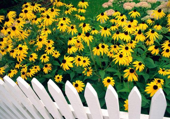 Sárga virágok és hófehér kerítés - az álomotthon háttérképét itt találod.
