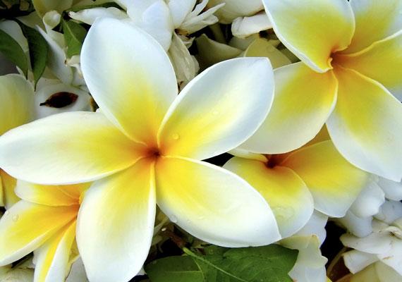 A harmatos virágszirmokról készült képet itt találod.