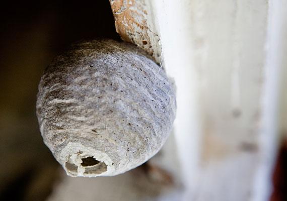 Rovarirtónak lenni sem egy leányálom: termeszek, csótányok, hangyák és méhek - nemcsak gusztustalan, még veszélyes is.