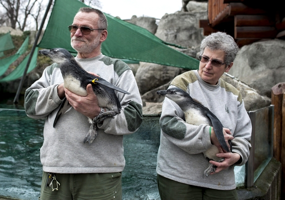 A fotón az állatok gondozóik kezében pihennek.
