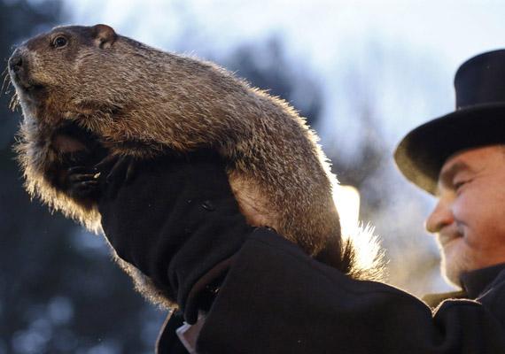 Ő Punxsutawneyi Phil, az egyesült államokbeli, pennsylvaniai Punxsutawney kisváros mormotája. 1887 óta úgy tartják, ha február 2-án meglátja az árnyékát, még hat hétig tél lesz. Korai tavaszt állapítottak meg.