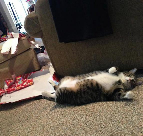 """""""A macskám karácsony reggelén felbontotta az összes ajándékot."""""""