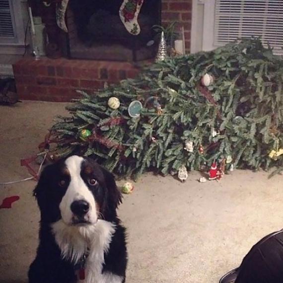 """""""A kutyák sem jönnek ki olyan jól a karácsonyfákkal."""""""