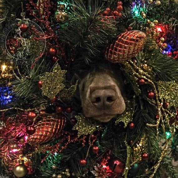 """""""Karácsony első napján az igaz szerelmem így szólt hozzám: a kutya a karácsonyfában van."""""""
