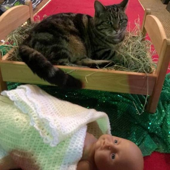 """""""A templomi macska kilakoltatta a kis Jézust a jászolból."""""""