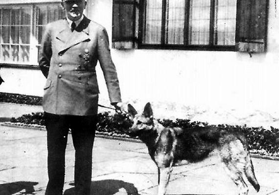 Blondi, a gyönyörű német juhász Adolf Hitler hűséges háziállata volt.