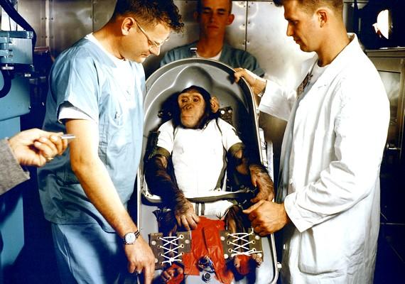 Ham, a csimpánz a NASA alkalmazásában állt, és az amerikaiak őt küldték fel először az űrbe.
