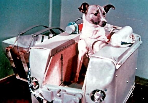 Lajka kutya volt az első a világon, akit a világűrbe küldtek - sajnos életét vesztette.
