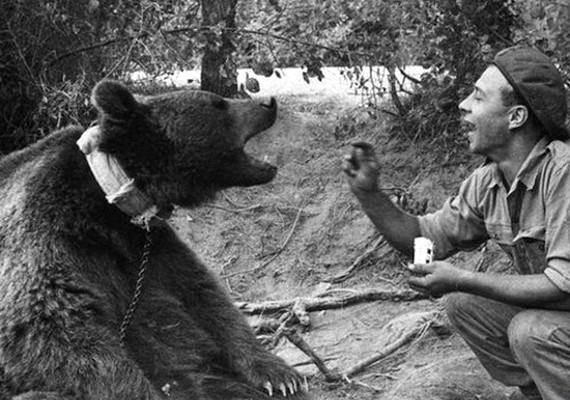 Wojtek, a medve a lengyel hadsereg kabalája volt, de rengeteget dolgozott is nekik hordárként és harcosként.