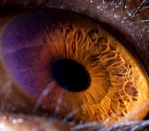 A csimpánz szeme szinte teljesen ugyanolyan, mint az emberé.