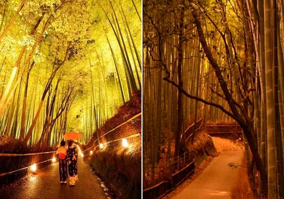 A bambuszerdő a legkülönfélébb fényviszonyokat produkálja.
