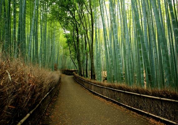 A rengetegben tiszta, kényelmesen bejárható ösvényeket alakítottak ki.