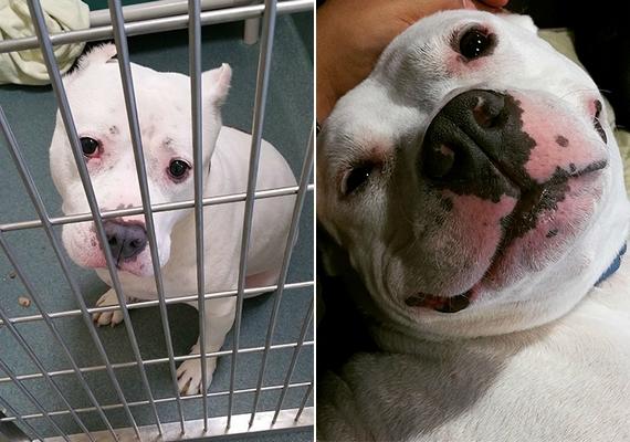 Hihetetlen, mennyire megváltozik egy kutya arckifejezése, amikor már biztonságban érzi magát. Pillow-val is ez történt.